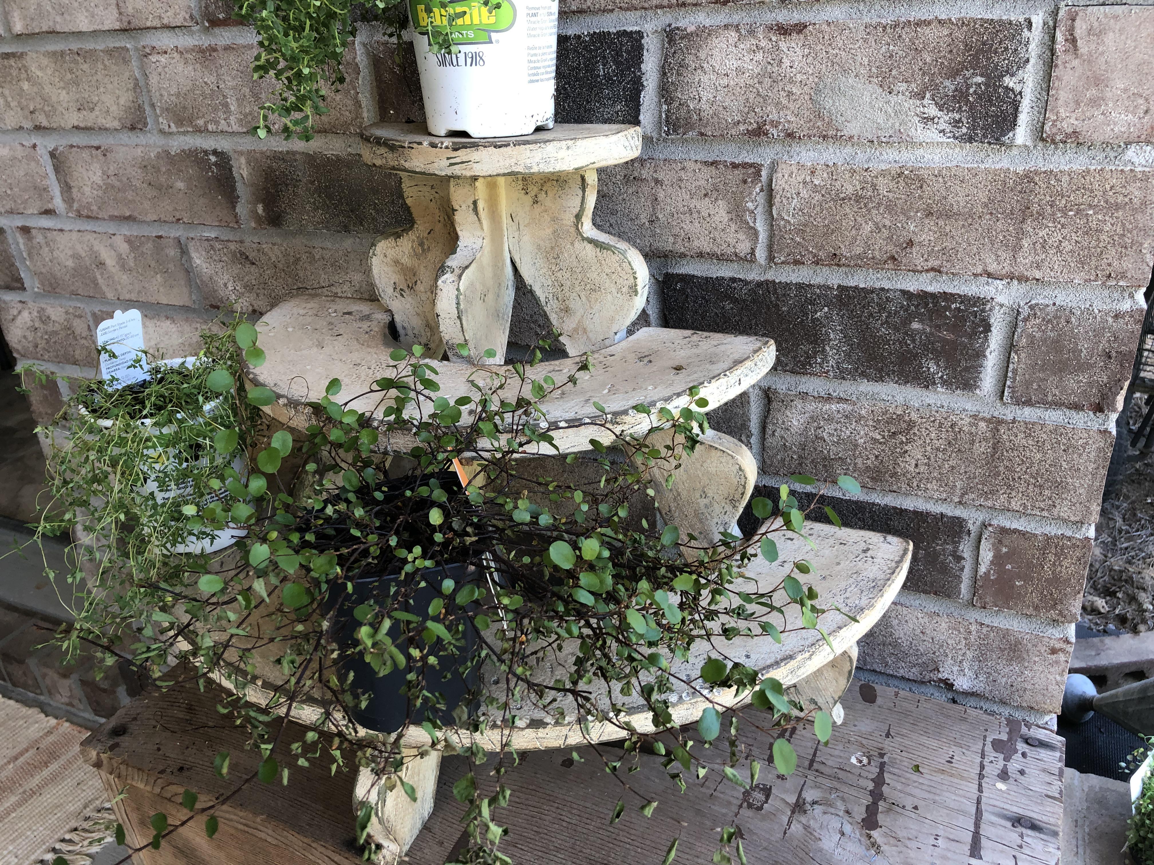 WN183 Old Herb Plant Shelf